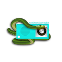 Rattlesnakeradio