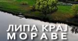 Lipa kraj Morave