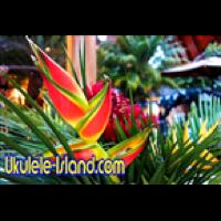 Aloha Joes Ukulele Island